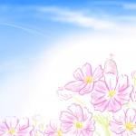 秋桜イラスト